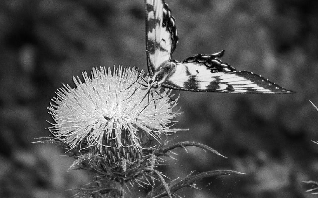 Butterfly Museum